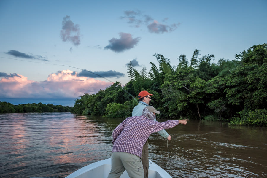 Guided fly fishing trips for Golden Dorado on the Parana in Argentina