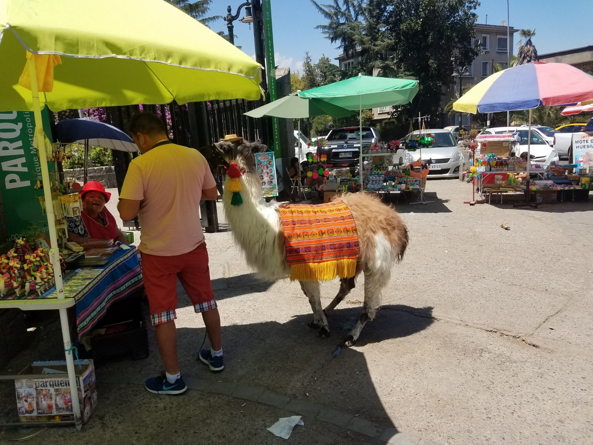 We encountered a friendly lama while touring the Bella Vista neighborhood