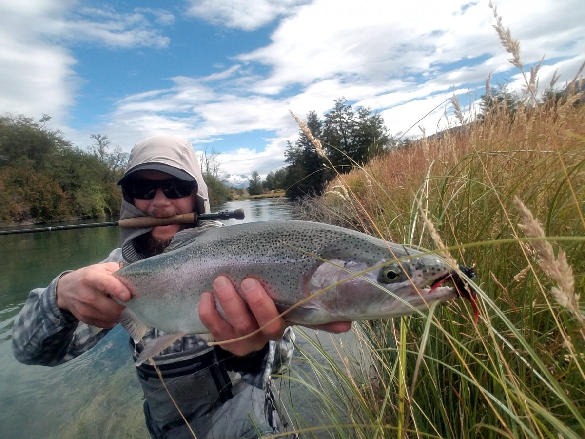 A healthy rainbow trout landed on the Cochrane