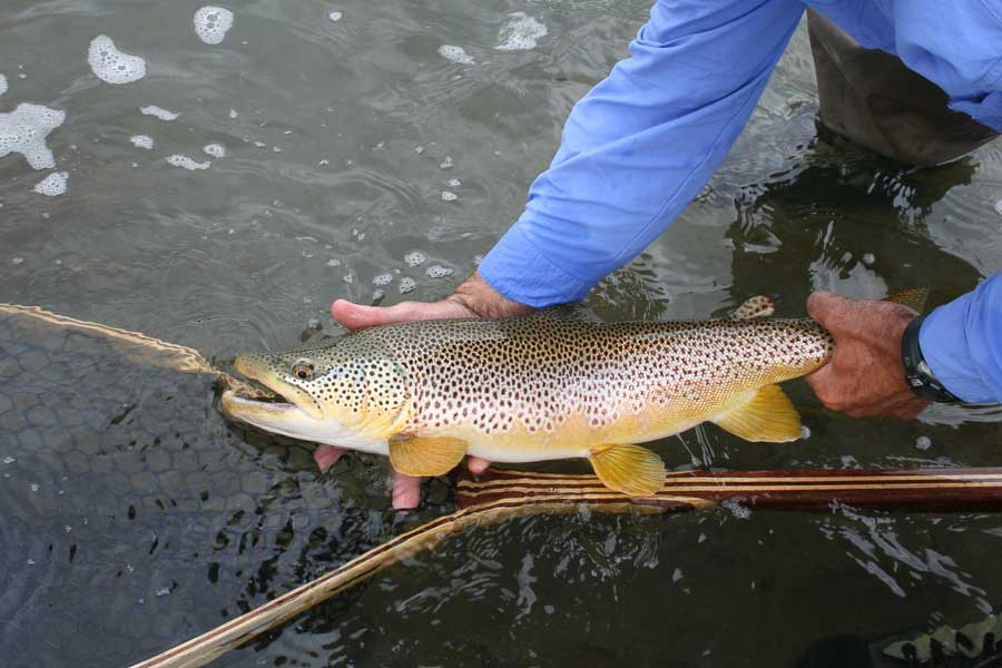 5 great rivers for spring fishing in montana during march for Trout fishing in missouri