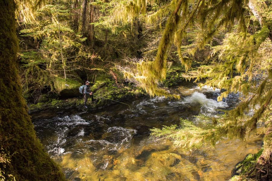 Fly fishing remote streams in Coastal Alaska for wild steelhead