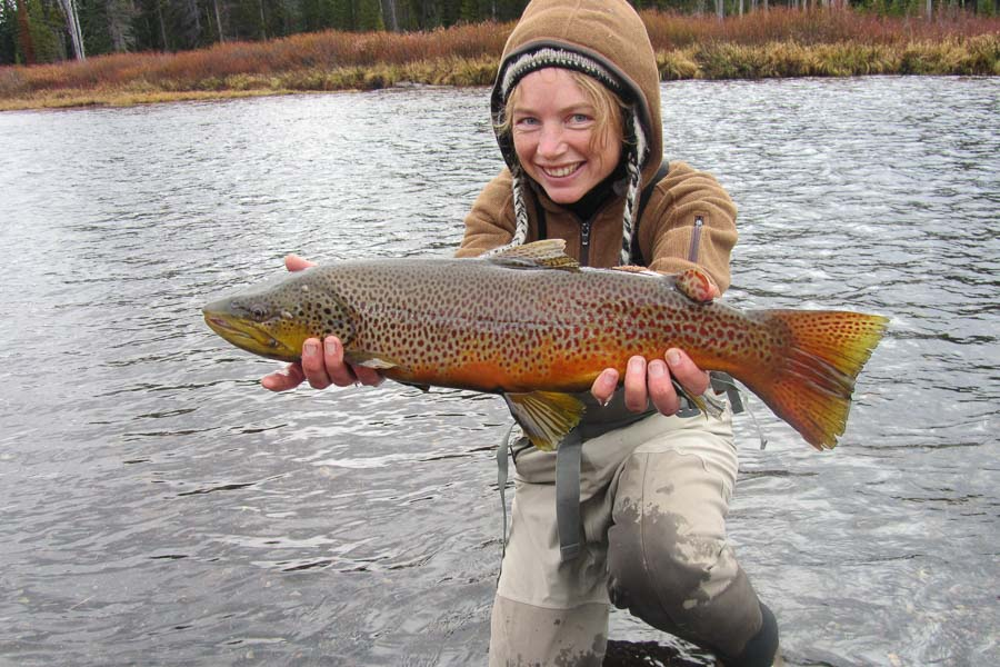 Big October Brown Trout